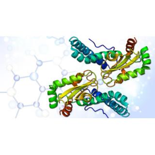 Супероксиддисмутаза – антиоксидантный фермент